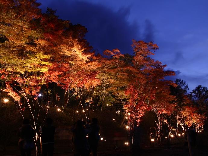 山中湖畔紅葉ライトアップ 「夕焼けの渚紅葉まつり