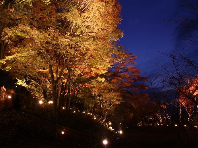 ブルーモーメントの紅葉 山中湖畔ライトアップ