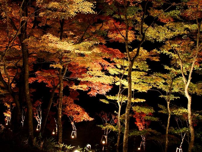 カラフルなモミジのライトアップ 山中湖畔