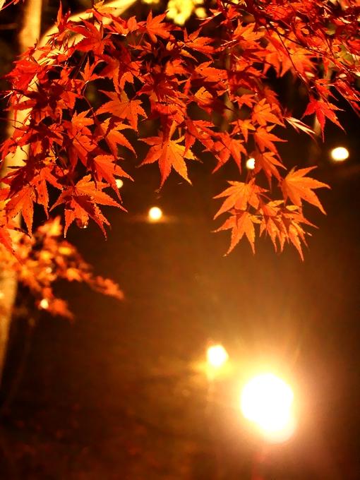 夕焼けの渚紅葉まつり 山中湖畔