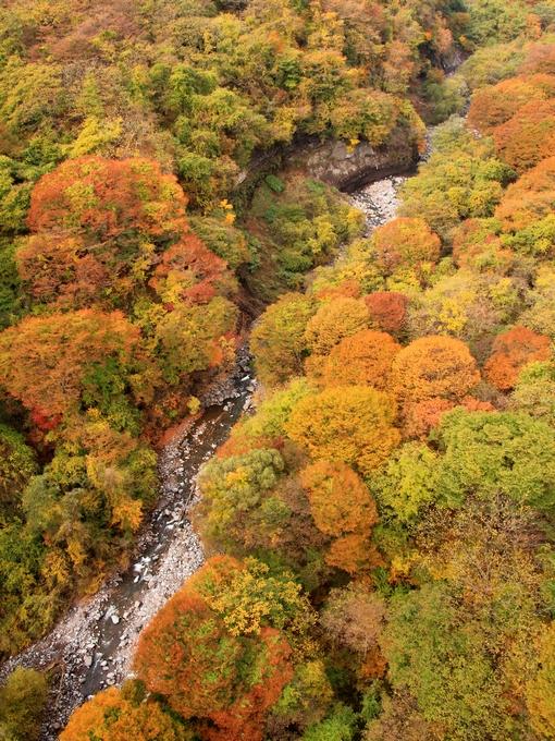 谷を染める紅葉 八ヶ岳高原大橋