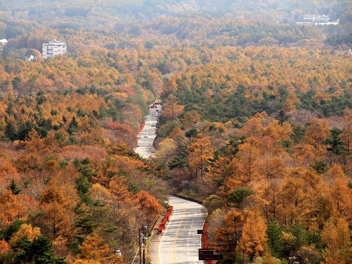美し森から眺めた清里高原の紅葉