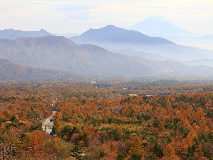 美し森の紅葉と富士山