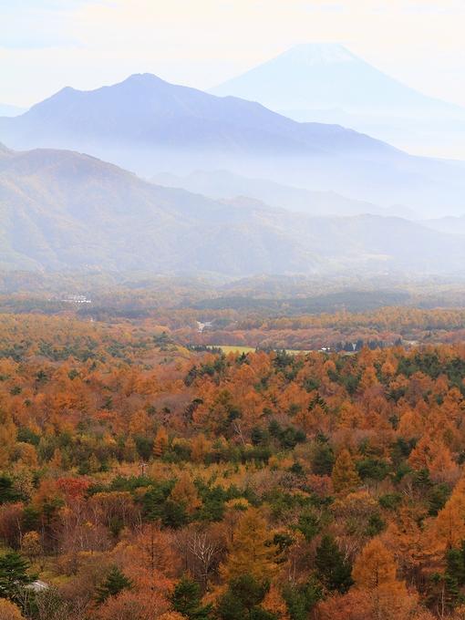 美し森から眺めた紅葉 富士山とともに.jpg