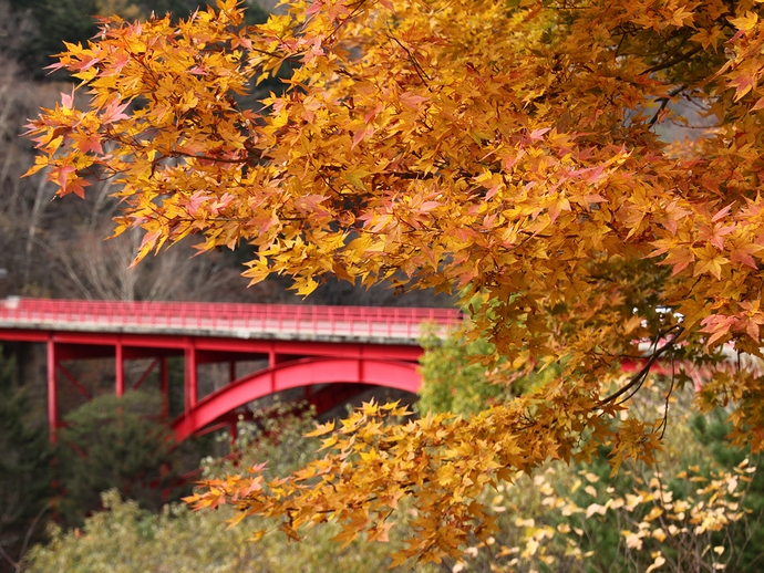 東沢大橋と紅葉