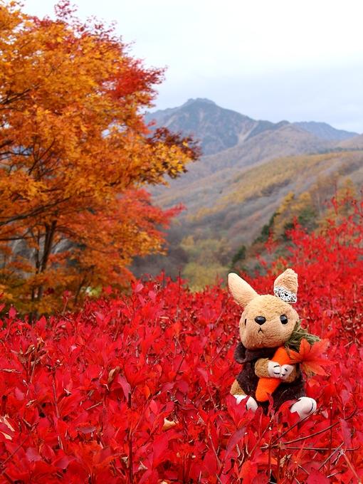 東沢大橋と紅葉 ウサギのヌイグルミとともに