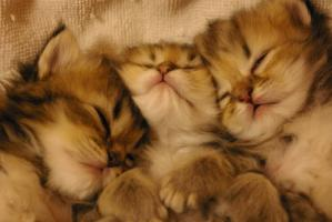 kitty 0