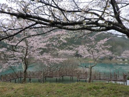 桜2012-1