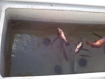 20110904釣り (4)
