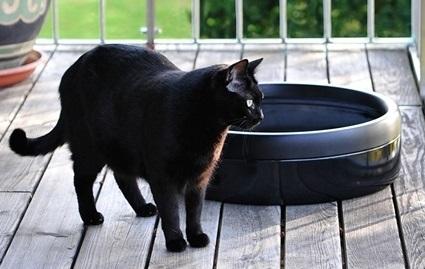 猫トイレ キャシット