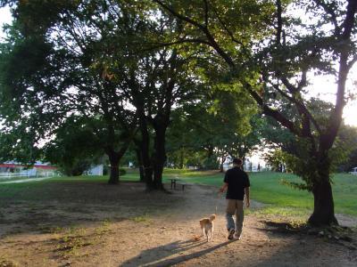 夕日を浴びながら歩きます