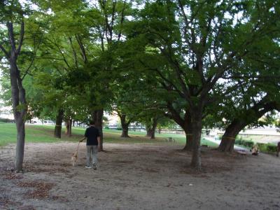 大きな木がたくさんあります