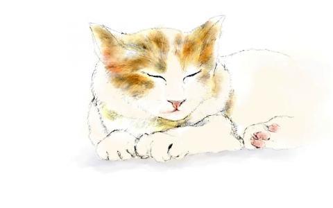 猫(11)
