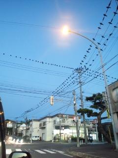 七飯町 夕方のカラス