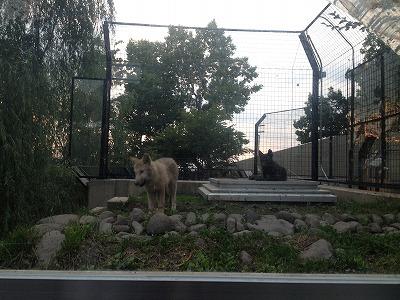 旭川 旭山動物園