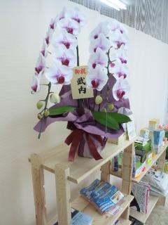 武内 優子さんから胡蝶蘭をいただきました♪