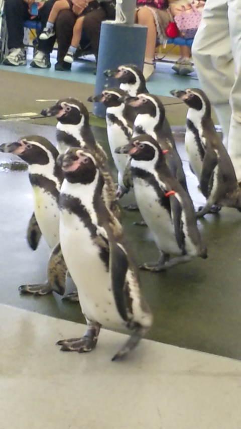 鳥羽水族館ペンギン2