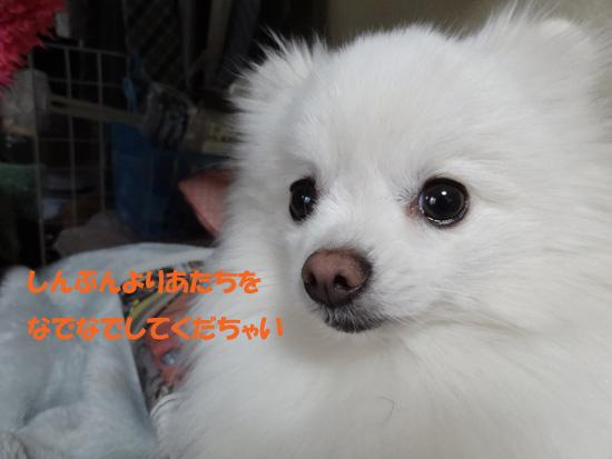 DSC01270_2.jpg
