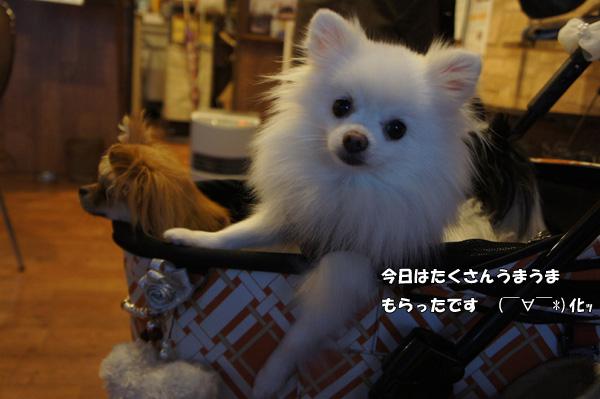 DSC03146_2.jpg
