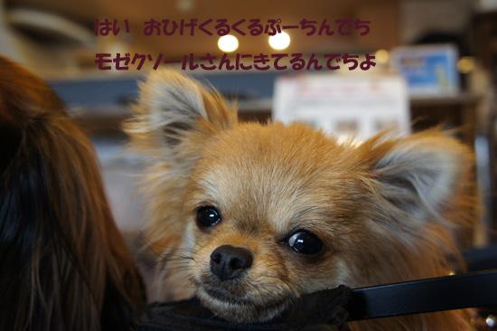 DSC09286_2.jpg