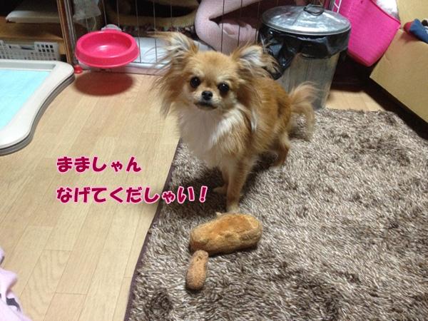 attachment00_2_20121120222409.jpg