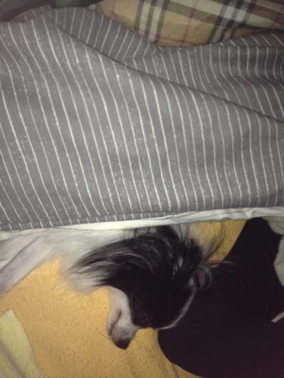 fc2blog_20121026221546d8a.jpg