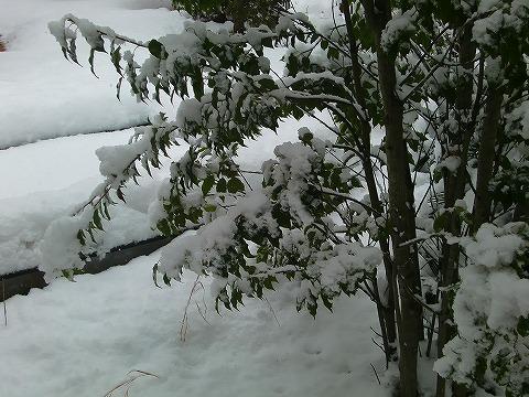また雪~! 14.2.11