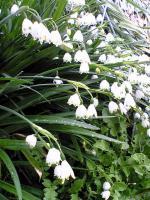 飯野山頂上の色々な花6