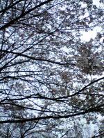 飯野山頂上の色々な花3