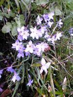 飯野山頂上の色々な花10