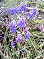 飯野山頂上の色々な花9