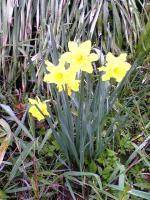 飯野山頂上の色々な花7