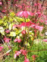 与島の鮮やかな色の植物2