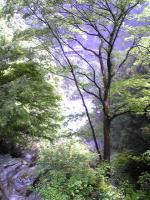 徳島県貞光川水系の鳴滝6