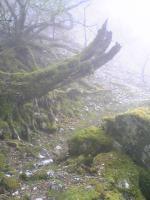 徳島県丸笹山の素晴らしい道4