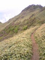 伊予富士登山道5