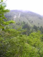伊予富士登山道の山ツツジ2