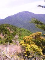 素晴らしいブナ林と笹原の道3