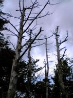 素晴らしいブナ林と笹原の道2