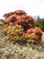 塔ノ丸登山道の奇岩の風景3