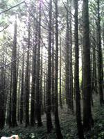 徳島県西祖谷中津山登山1