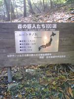 1森の巨人たち100選4
