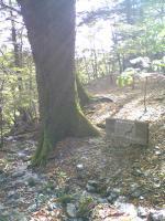 1森の巨人たち100選3