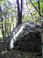 1岩を掴む逞しい樹木3