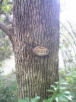 1飯野山の植物2
