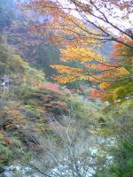 1面河渓谷の素晴らしい紅葉4