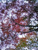 1面河渓谷の素晴らしい紅葉2