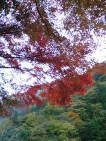 1面河渓谷の素晴らしい紅葉1