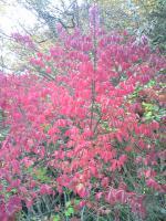 1小豆島の素晴らしい紅葉2