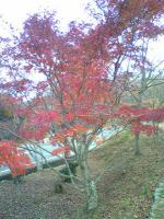 1小豆島の素晴らしい紅葉1